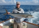 King mackerel i megaformat.