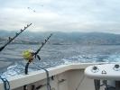 Marlinfiske Madeira