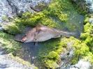 Bifångst vid fiske på Hanö