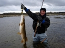 Bifångst om man fiskar i Blekinge