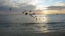 Pelikaner på jakt.