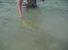 Mats släpper tillbaka en bonefish