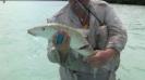 Barracuda har nafsat på Jannes fisk