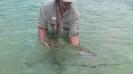 Grann bonefish tog Tords fluga